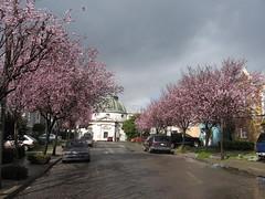 San Francisco Columbarium (Atom Ess) Tags: sanfrancisco san francisco blossoms columbarium plumtrees