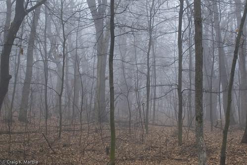 fog forrest