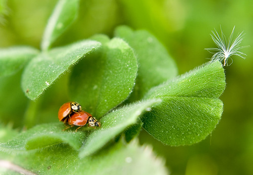 Ladybugs Doing It