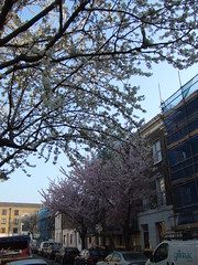 Balfe Street in bloom #2
