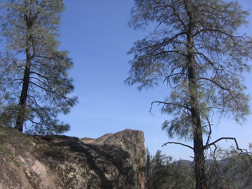 Always nice trees at the Pinnacles