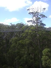 Tree Top Walk: High