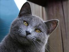 Happy Cat (Boered) Tags: smile cat happy jinx cc200 cc100 cc500 colorphotoaward impressedbeauty