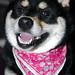 柴犬:DSC_0085.JPG