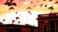 Birds - by slack12