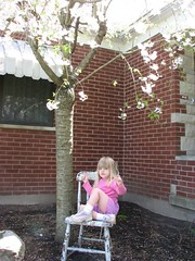 Lorelei under cherry tree
