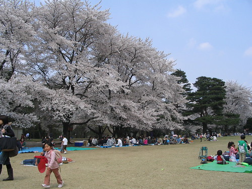 Hanami at Inariyamakoen