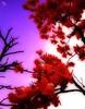 magnolias (totomai) Tags: pink red flower bravo post violet processing dreamy dreamlike congratulations trial interestingness9 orton blueribbonwinner challengeyouwinner anawesomeshot superaplus aplusphoto ultimateshot goldenphotographer explore14april2007