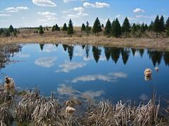 Natures Mirror
