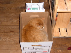 fergus in a box