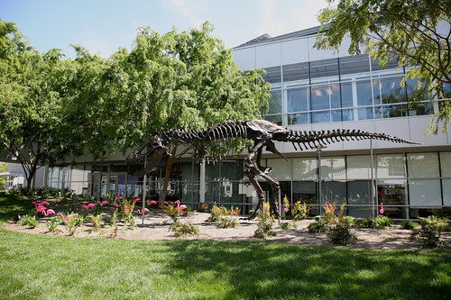 Google T-Rex Skeleton