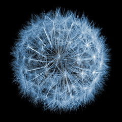 Dandelion clock (Matt West) Tags: blue plant black flower macro weed seed dandelionclock views200 abigfave weethebedo