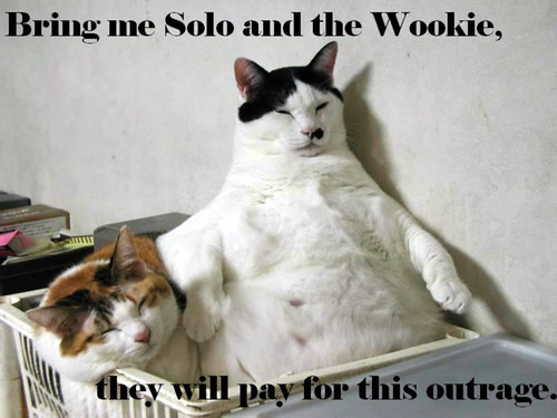 Thumb Jabba the Cat: Traéme a Solo y al Wookie