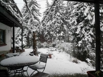 glyzinie im schnee