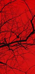 Poe-esque (Furryscaly) Tags: red tree bird animal silhouette backlight aves backlit crow takeoff silhouetted animalia avian backlighting feathered americancrow taxonomy:class=aves taxonomy:kingdom=animalia