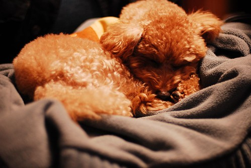 DOG LIFE, Jan 07'
