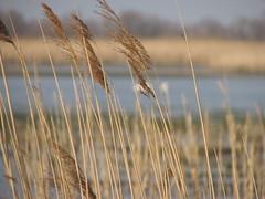 Deux Cygnes (kahala) Tags: bike swans marsh vélo étang camargue balade arlesbykahala