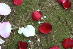 Petals & Doves