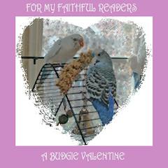 A Budgie Valentine