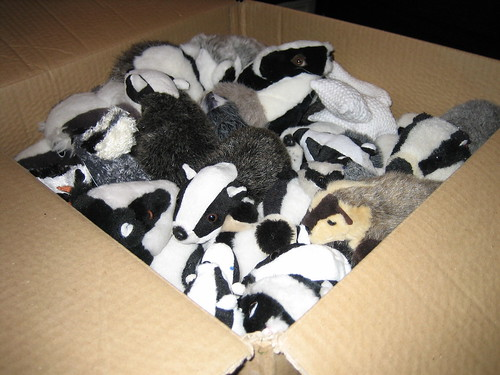 Box of badgers (closeup)