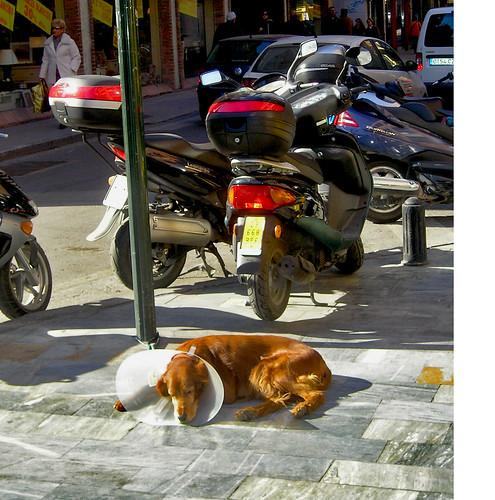 Un perro, sin  más