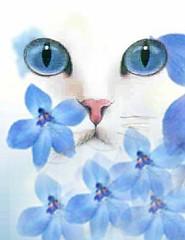 Cat (afoxcat) Tags: whitecat blending blueflowers