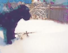 Skip by my  snowcovered garden
