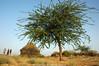 Places: Thar desert begins here... (Ameer Hamza) Tags: travel sunlight 3 tree three desert hut pakistani guide sind hamza thar ameer scoopt ಥಾರ್ ಮರುಭೂಮಿ nearumerkot ahinduvillageinpakistan