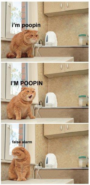 poopin