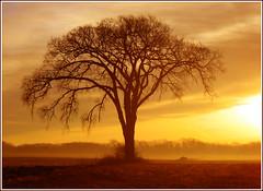 Morning Glow (~Zeannie~) Tags: sky tree topf25 bravo soe naturesfinest beautyisintheeye outstandingshots abigfave 123f50 shieldofexcellence anawesomeshot impressedbeauty flickrdiamond citrit flickrphotoaward finefind