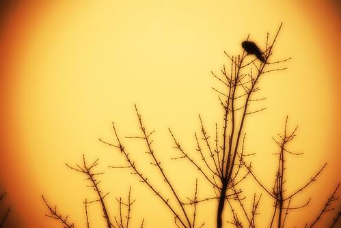 victor_nuno 拍攝的 Morning star / Estrella de la mañana。