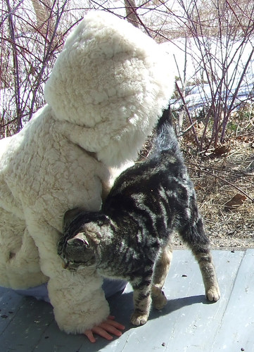 kitten 3
