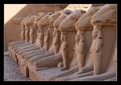 Carneros en Karnak