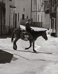 (guadags) Tags: street bw espaa man rural luces calle spain village donkey olympus lonely sombras hombre mula extremadura e500 longevidad mywinners abigfave villuercas ala