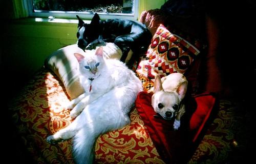 3 favorite pets