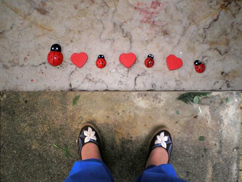 joaninhas   ladybugs