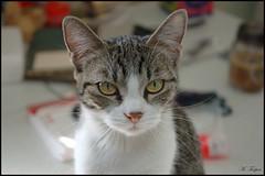 Molly (Mary T.) Tags: 15fav pet animal cat march feline tabby molly 100views cutecat 2007 cc100 march2007 bestofcats boc0407
