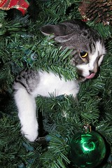 A Very Tastey Schmooey Christmas