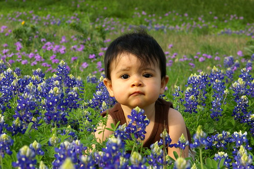Rachel in the bluebonnets