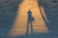 shadow frost pim plm