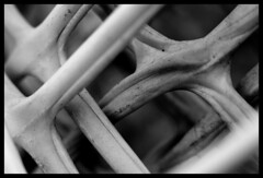 flex (♫ marc_l'esperance) Tags: light shadow blackandwhite bw orange abstract blur macro monochrome lines contrast canon dark eos raw pattern dof abstractart © shapes x plastic 10d repetition forms layers fencing nocrop uncropped allrightsreserved 2007 greyscale ganglia cml repeating extensiontube thegallery canonef50mmf14usm sinew sinewy 123bw weeklyfav07