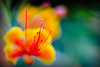 So bored in here, let's go play outside ! (kktp_) Tags: flowers flower macro nature d50 nikon bravo dof bokeh prideofbarbados dwarfpoinciana ดอกไม้ peacockflower instantfave 1500v60f outstandingshots tamronspaf90mmf28dimacro11 abigfave peacockscrest anawesomeshot impressedbeauty ultimateshot superbmasterpiece painterlyeffectstraightfromcamera