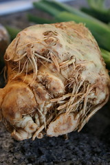 Celeriac, the king of ugly