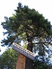 New Sign (shredmaximus) Tags: oregon paradise skiing mounthood