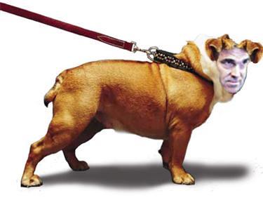 perrydog