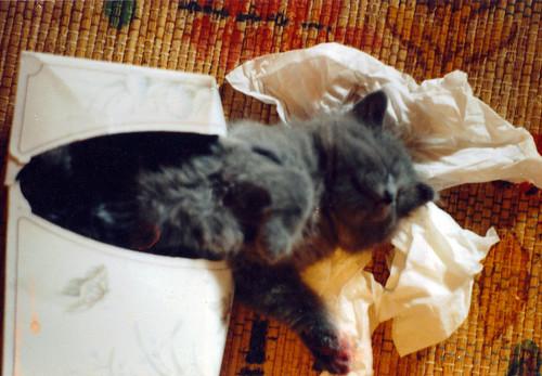 baby wylie in tissue box