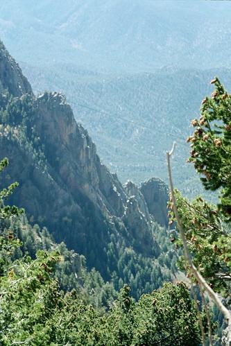 trees on mountains 2