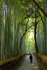 Bamboo grove in Kyoto. - by gak