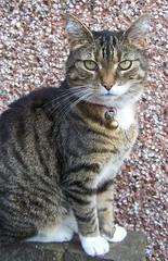 Tammy (Su ) Tags: wall cat tammy kissablekat bestofcats