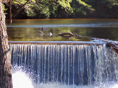 ducks and waterfall
